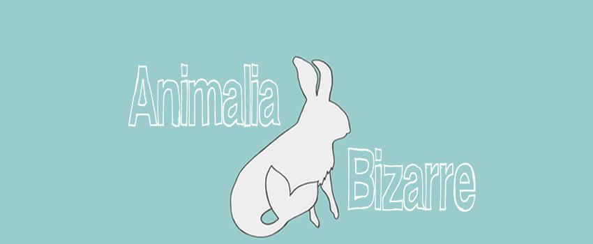animalia bizarre logo